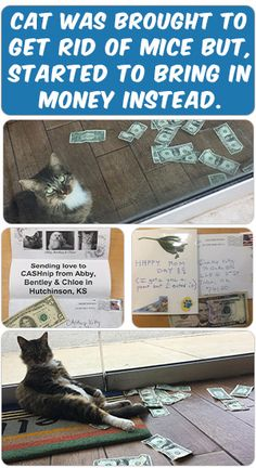 This lovely kitty was adopted by the owner of the marketing agency GuRuStu, in Tulsa. The thing was that they needed to keep mice away, and having a cat was a great solution to help solve this problem. Instead Of Catching a Mise the cat started to bring money to the office ...  Read more by clicking on the PIN