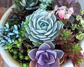 Succulent Plant DIY Dish Garden Set by SucculentJewels on Etsy, $39.99