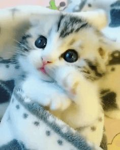 TO watch cat video stories , cat rescue ideas , rescue pets , funny cats and kittens videos stories Kittens And Puppies, Cute Cats And Kittens, Kittens Cutest, Cute Kitten Gif, Baby Animals, Funny Animals, Cute Animals, Pretty Cats, Beautiful Cats