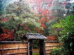 地蔵院:朝靄の境内