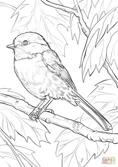 Black-capped Chickadee coloring page | Free Printable Coloring Pages