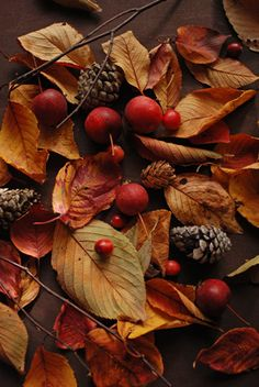 cones, berries and fall leaves