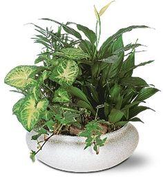 Green Garden Bowl  Item TF192-2