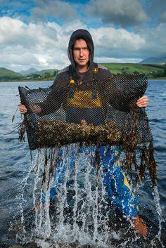 harvesting oysters, Isle of Skye, Scotland, UK | Jim Richardson, National Geographic