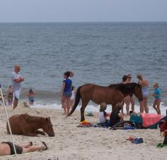 Assateague, Maryland. These horses scared the shit out of me but the beach was beautiful