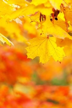 Abstract, Autumn, Bright, Color