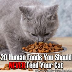 20 Human Foods You Should NEVER Feed Your Cat [Click on link]