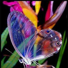 Adorable Butterfly ♥ | Most Beautiful Pages