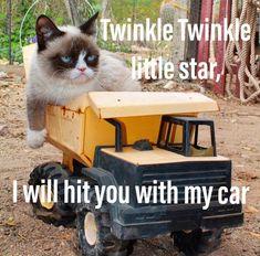 [Humor]Grumpy Cat twinkle twinkle little star Grumpy Cat Quotes, Funny Grumpy Cat Memes, Funny Animal Jokes, Cute Funny Animals, Funny Animal Pictures, Funny Cute, Cute Cats, Grumpy Cats, Grumpy Cat Images