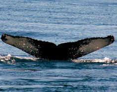 Whale watching, Bar Harbor, ME
