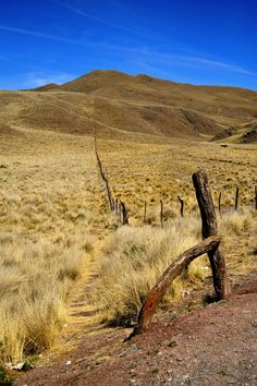 Parque Nacional Los Cardones, Salta, Argentina — by Girl in compartment C. Love the colour of the grass around here. Pretty high up too - around 3500 metres.