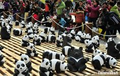 """Paper pandas and Formosan black bears are presented during the """"Pandas World Tour"""" in Taipei, southeast China's Taiwan, March 14, 2014. A total of 1,600 paper pandas and 200 paper black bears were on display.   http://www.cultureincart.com/symbol/s-panda"""