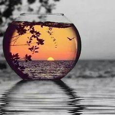 Fishbowl -- Splash of color -- black and white #sunset