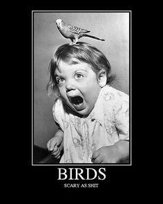 This is me after seeing The Birds