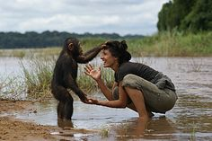 A young orphan chimpanzee at the Papay project in Cameroun playing with Vula, a Greek world traveller