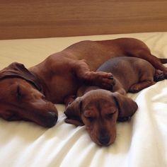".dachshund mommie says, ""I've got you""."