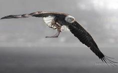 Winter Wings Festival à Klamath Falls (Oregon) du 11 au 14/02 | Photographie de Peter Chromik :  Pygargue à tête blanche (Haliaeetus leucocephalus) dans l'Illinois. Le bassin de la rivière Klamath accueille l'une des plus fortes concentrations hivernales de pygargues d'Amérique du Nord. #ornithologie #oiseaux #nature