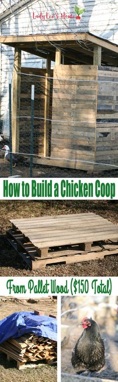 How to build a chicken coop using pallet wood. I used free pallet wood and salvaged some other materials in order to build this coop. This made it possible for me to keep the cost down at $150. Raising Backyard Chickens, Meat Chickens, Backyard Farming, Free Pallets, Building A Chicken Coop, Chicken Coop Pallets, Chicken Coop Plans, Diy Chicken Coop, Pallet Wood