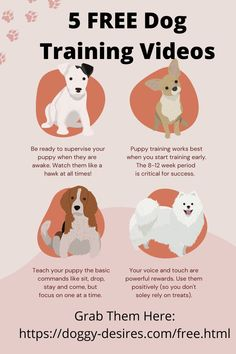 Discover How These 5 Free Videos Will Solve Your Dog And Puppy Behavioral Issues. #dog training #puppy training #how to train my poodle #stop barking # potty training. Online Dog Training, Dog Training Videos, Best Dog Training, Puppy Training Tips, Potty Training, Best Grass Seed, Puppy Pads, Puppies Tips, Positive Reinforcement