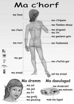Mon corps. Affiche scolaire en langue bretonne European Languages, Love Languages, Breizh Ma Bro, Region Bretagne, Celtic Nations, Scottish Gaelic, Brittany France, Know It All, Language Lessons