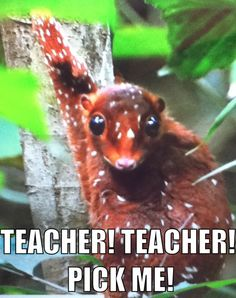 Errry dang day! Teacher pick me, I'm right here! My thought exactly...