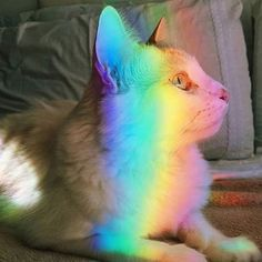 ♡ Rainbow kitty  via @vibenapaz ✨