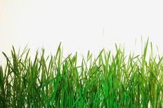 El uso del vinagre como un herbicida natural