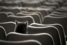 so...a cat walked into the theater and....