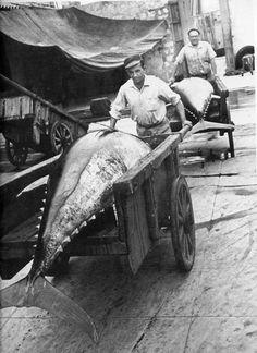 Pescatori di tonno dopo la mattanza