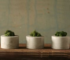 Concrete Moss Trio - can you kill moss?  If not, I am SO getting these!