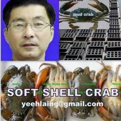 Mr Yee Hlaing Soft Crab, Soft Shell Crab, Photo And Video, Things To Sell