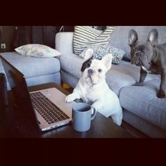 Manny and Frank♡♡♡♡♡♡?