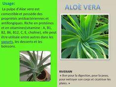 Blog Newsletters It Works Duthil Dominique: Le TONER à base d' Aloé Vera pour soulager des piq...