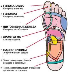 Рефлексология стопы.На ногах человека находятся тысячи нервных окончаний. Когда ты носишь неудобную обувь, они травмируются, многие болезни связаны именно с этими постоянными микротравмами. Специальные нажатия на определенные точки, которые расположены на стопе, помогут тебе не только расслабиться, но и простимулировать организм, дать настрой на правильную работу. Благодаря чудо-массажу стопы ты можешь влиять на разные органы и системы тела! Не пожалей несколько минут для себя, помассируй…