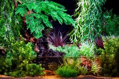 Image detail for -How to set up a paludarium   Features   Practical Fishkeeping