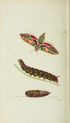The naturalist's miscellany, or Coloured figures of natural objects. By George Shaw, 1751-1813. Printed for Nodder & Co.,1789-1813 - Biodiversity Heritage Library