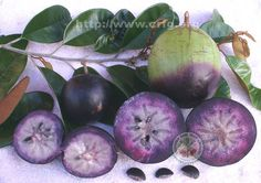 Gallery of Rare Fruits 1st Place: Two Purple Starapple Varieties Crossectioned, Oscar Jaitt, Pahoa, Hi