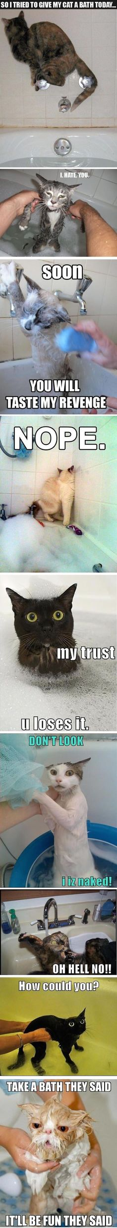 Funny cat bath pictures>>> XD I couldn't stop laughing Animal Jokes, Funny Animal Memes, Cute Funny Animals, Funny Animal Pictures, Cute Baby Animals, Cat Memes, Funny Cute, Best Funny Pictures, Cute Cats