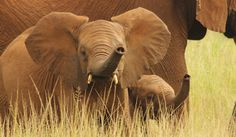 Animals Of The World, Conservation, Charity, Creepy, Elephant, Good Things, Cute, Travel Tips, Blog