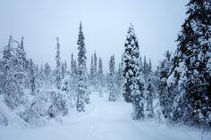 Stunning Lapland