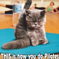 Funny Quotes about Pilates