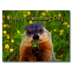 Happy Groundhog Day Gifts - Happy Groundhog Day Gift Ideas on Zazzle