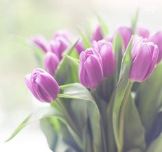 Photograph of gorgeous bouquet of purple tulips taken by Fliiby publisher Nigrita https://fliiby.com/file/pkxf3pzvm2y/?utm_content=bufferec67f&utm_medium=social&utm_source=pinterest.com&utm_campaign=buffer #photo #nature #flower