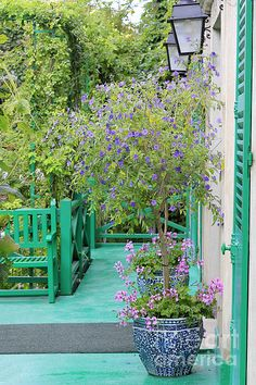 Potted colour at the Monet garden in Giverny France