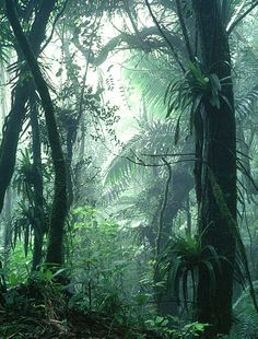 El Yonque Rain Forrest
