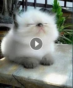 Video Cute Cats and Kittens Doing Funny Things - Funny Cat compilation - Cute Kitten Gif, Kittens Cutest, Cats And Kittens, Cute Cats, Kittens Meowing, Tiny Kitten, Kitty Cats, Cat Gif, Baby Animals