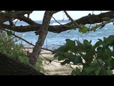 History of St. Croix - U.S. Virgin Islands