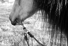 What? This is literally just tugging super hard at the bottom part of the horses mouth and you can see the fur and muscle down there being pulled.