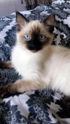 Cute cat inspiration