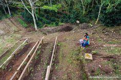 Terreno donde se cultiva el café.